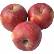 Μήλα Στάρκιν (Starkin)