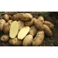 Πατάτες (τηγάνι)